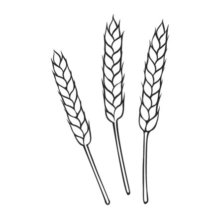 Rye or wheat spikelets outline. Hand drawn vector illustration cereals for design of baking and bread products.