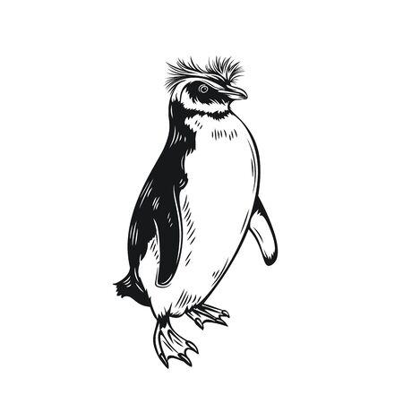 Penguin outline icon. Aquatic flightless birds for zoo design. vector illustration. Illustration