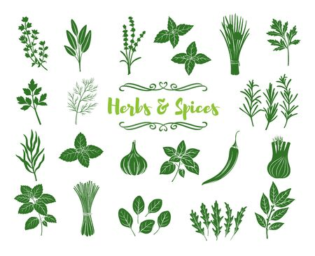 Herbs and spices glyph icons. Silhouettes popular culinary herbs, stamp print vector illustration. Bay leaf, chili, lemongrass, fennel cilantro. Thyme, lemon balm, tarragon etc. Seasoning food.