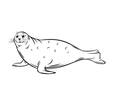 Sea calf. Seal animal outline icon. Polar pinniped mammal, vector illustration.