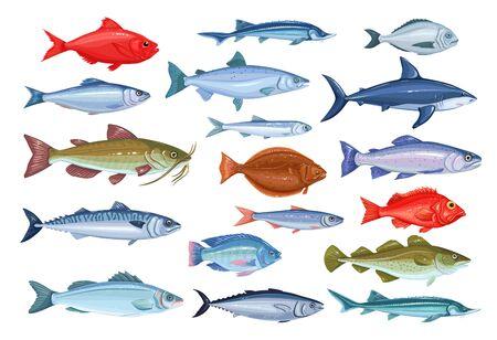 Fish icons. Seafood of bream, mackerel, tunny or sterlet, catfish, codfish and halibut. Cartoon icon tilapia, ocean perch, sardine, anchovy, shark, sea bass and dorado. Vector illustration