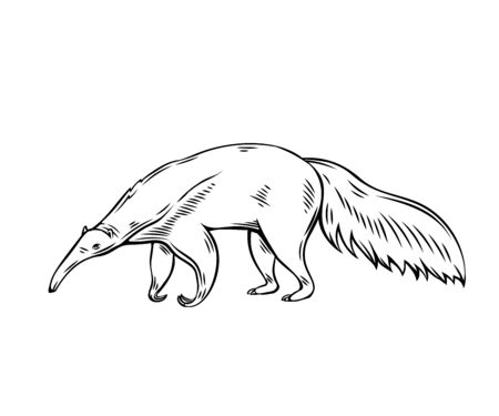 Anteater animal icon. Ant-bear outline vector illustration for zoo design.