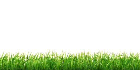 Green grass seamless border. Realistic horizontal field, lawn or meadow. Vector illustration.
