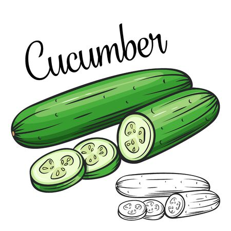 Cucumber vector drawing icon. Vegetable in retro style, outline illustration of farm product for design advertising products shop or market. Vecteurs