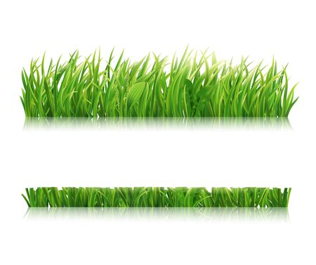 Mowed green grass isolated on white background. Realistic horizontal field, lawn or meadow. Vector illustration. Vettoriali