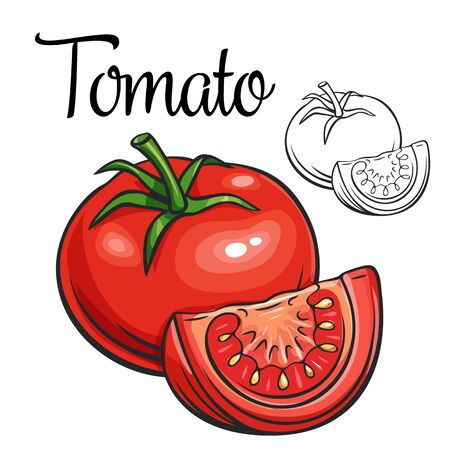 Tomato vector drawing icon. Vegetable in retro style, outline illustration of farm product for design advertising products shop or market.