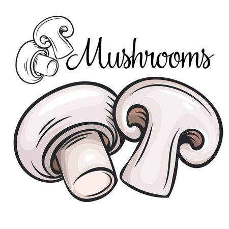 Mushrooms champignon vector drawing icon. Vegetable in retro style, outline illustration of farm product for design advertising products shop or market.