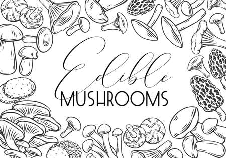 Engraved mushrooms for menu, label or packaging. Hand drawn edible mushrooms boletus, chanterelles, oyster mushrooms, butterdish, shiitake, truffle and morel, vector background.