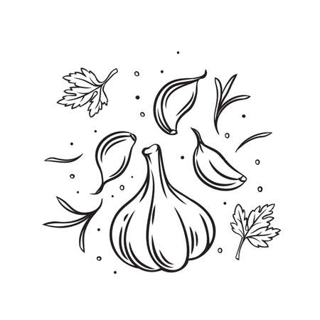 Falling garlic with herbs and spices. Cooking spicy food concept. Drawn engraved vector illustration of fresh garlic. Vektorgrafik