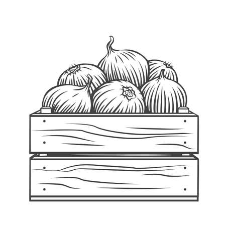 Pile of onion bulbs in wooden crate engraved vector illustration. Hand drawn harvest of onion vegetables, farm product.