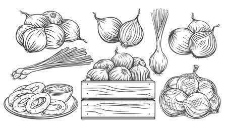 Onion outline drawn monochrome icon set. Pile of onion bulbs, packed in net bag, in wooden crate, bunch of fresh green onions and rings. Vector illustration of harvest vegetables, farm product.