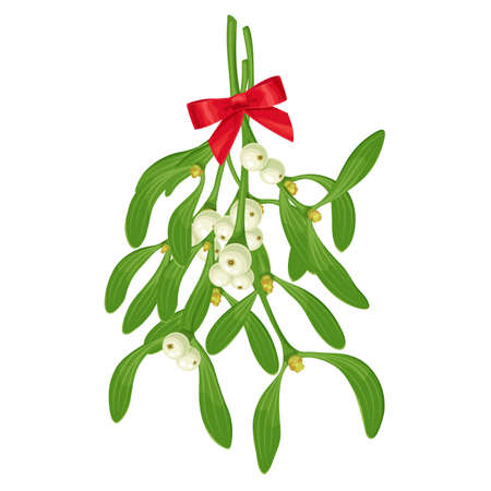 Ð¥-mas sprigs of mistletoe hanging with white berries, green leaves and red bow. Christmas traditional decoration, holiday celebration symbol, botanical vector realistic illustration isolated on white.