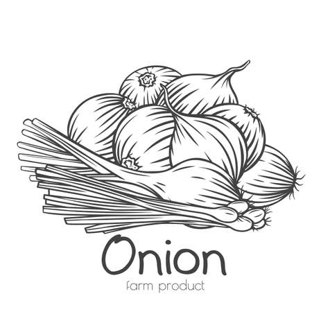 Onion bulbs, scallion, leek outline hand-drawn engraved monochrome vector illustration in retro sketch style. Bunch of onions, isolated pile of harvest vegetables. Ad farm products shop, market label