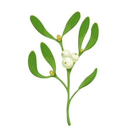 Ð¥-mas sprig of mistletoe with white berries, vector realistic botanical illustration isolated on white. Christmas traditional decoration twig with green leaves, holiday celebration symbol. Ilustração