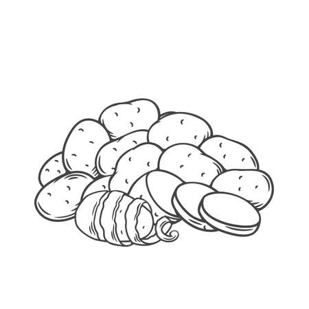 Potato tubers outline hand-drawn monochrome vector illustration in retro sketch style for store ad, market label, pile of farm potatoes. Engraved isolated root crops whole, with twisted peel, slices