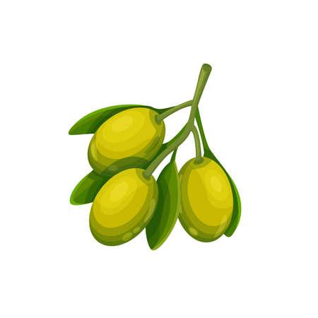 Vector olive sprig. Vegetable illustration for farm market menu. Healthy food design