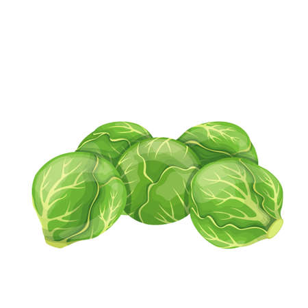 Brussels sprouts vector. Green vegetables in cartoon style. Illustration of a pile of Brussels sprouts.
