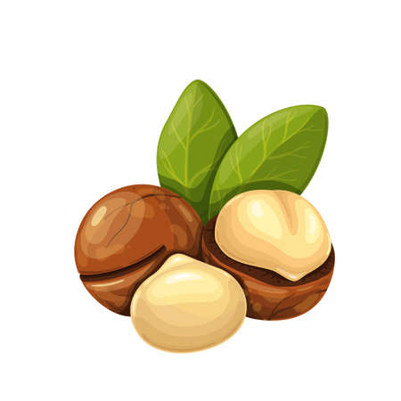 Macadamia nuts with leafs