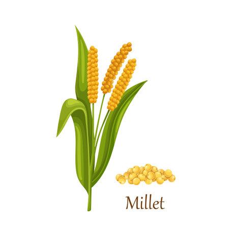 Millet grass cereal crops or grains