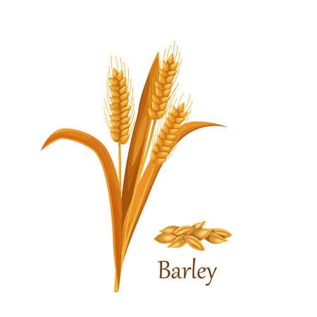 Barley grass cereal crops Stock Illustratie