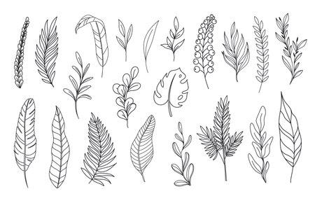 Modern line art tropical leaves.