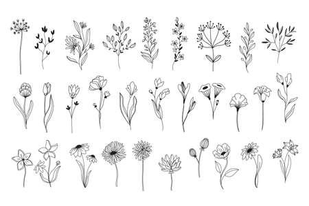 Line art floral elements.