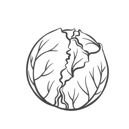 Cabbage vegetable outline icon