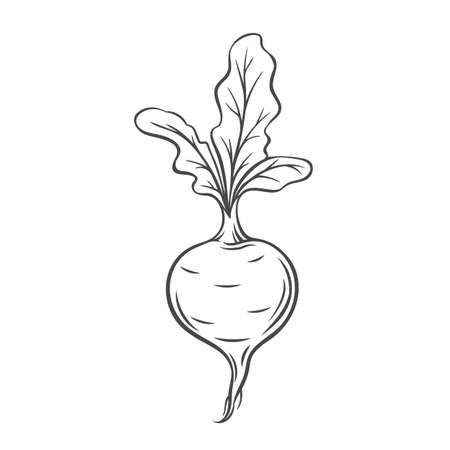 Beet vegetable outline icon Stock Illustratie