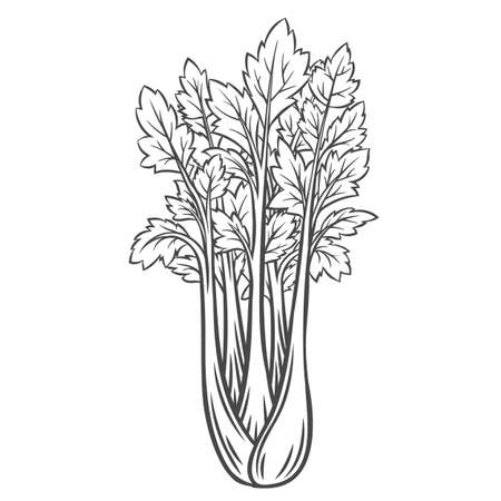 Celery vegetable outline icon