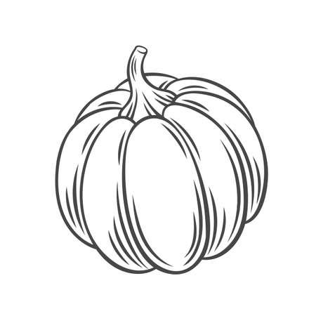 Pumpkin vegetable outline icon