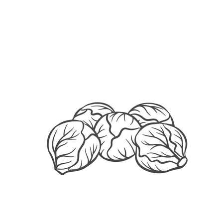 Brussels sprouts vegetable outline icon