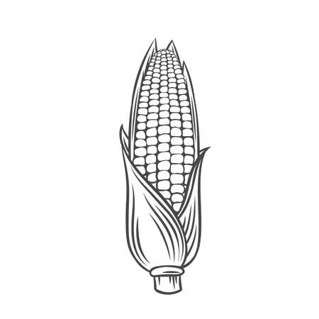 Ear of corn vegetable outline icon