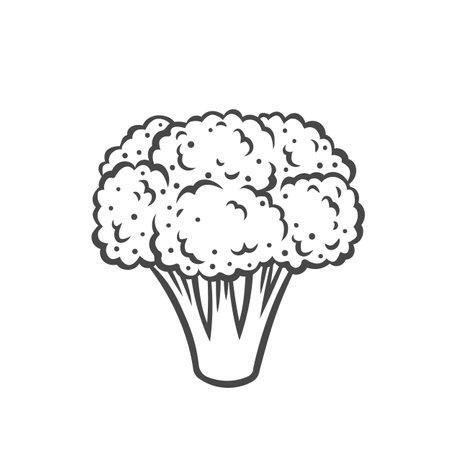 Broccoli vegetable outline icon