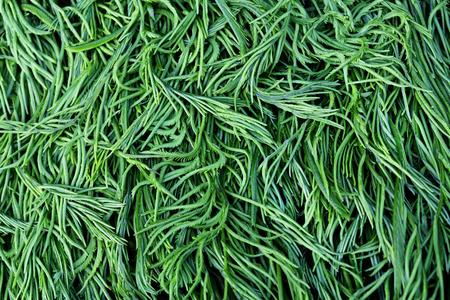 pennata: cha-om is thai vegetable or Acacia Pennata  Stock Photo