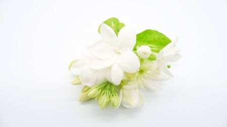 White jasmine flowers isolated on white background. 스톡 콘텐츠