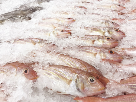 Ornate threadfin bream (Sharptooth snapper) fish freezing in the ice of fish shelf fresh market. Raw material fresh for cooking food.