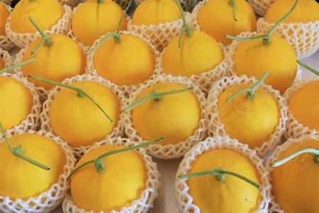Cantaloupe melon and galia melon in fruit packaging net. Fresh melon with foam net in fruit market. 免版税图像