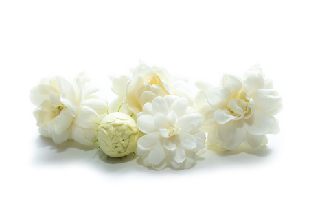 Jasmine flowers (Arabian Jasmine, Jasminum sambac) isolated in white background.