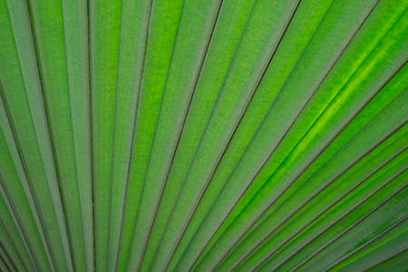 Close-up of Green leaf nature texture abstract background. Detail of foliage pattern structure macro of plant.