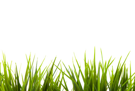 warm things: grass on white background Stock Photo
