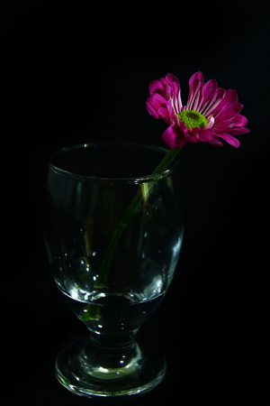 still life with flower in a glass  photo