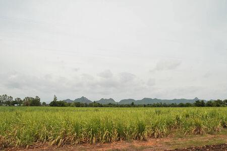 grassland Thailand,land scape