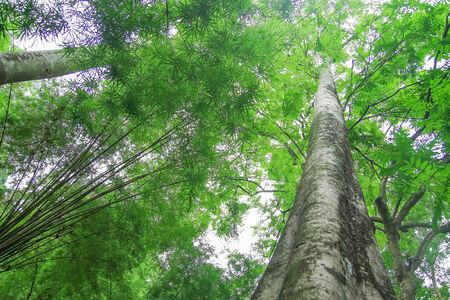 sunlight in a Beech Tree Forest