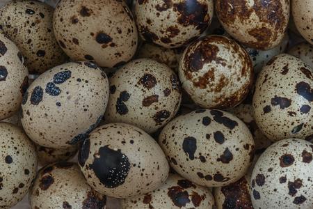 huevos de codorniz: dispersión de pequeños huevos de codorniz para cocinar