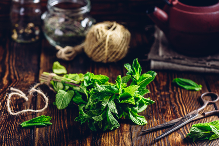Bunch of Fresh Mint with Rusty Scissors. Tangle with Two Jars and Teapot on Backdrop. Stock Photo