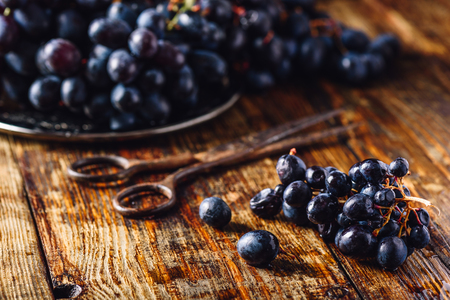 Blue Vine Grapes and Rusty Scissors on Wooden Surface. Stock Photo