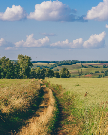 Country Road in Green Field on a Sunny Day. Stok Fotoğraf - 117897267