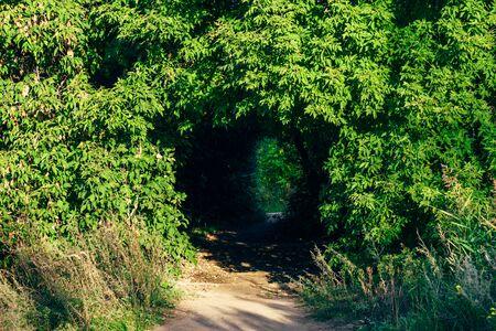 Hidden walkway through the bush in forest thicket