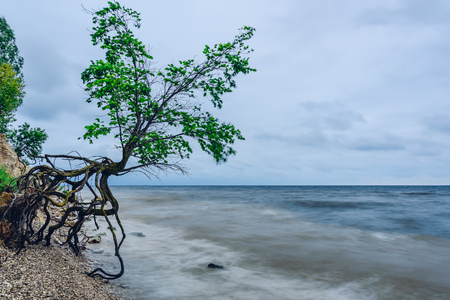 Single tree on the rocky shore at stormy overcast day