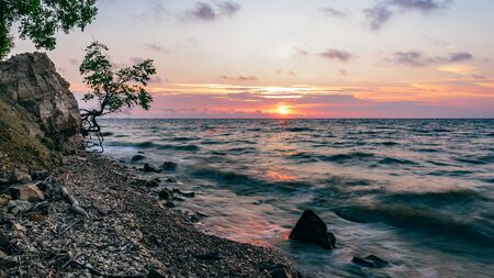 Single tree on the rocky shore at summer sunrise